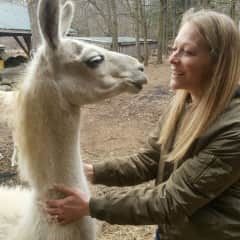 Ok, you might not need llama sitting, but if you do...