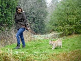 Katie walking an unusual client through the snow - a Siberian Lynx!
