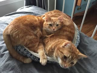 What do you mean, this bed is designed for one cat?