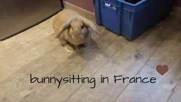 bunnysitting in France