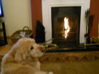 Oscar in front of the fire (his favourite place)!