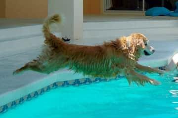 Gracie Takes a Dip!!!