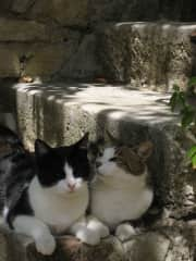 Blackie and Snowy, Tuscan farm cats