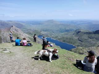 With Morris the dog on Mt Snowdon.Housesit in summer 2019