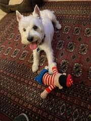 """This is my new little brother Yoni who was """"rescued"""" at the age of 13! He has landed in what I call the best doggie Assisted Living Center! My parents house. He now enjoys  being spoiled with treats, tickles, walks, toys, and 24/7 companionship."""