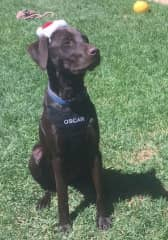 Oscar loves to be near you. He gets very excited around food and walk times. Listens to commands and loves chasing/retrieving a ball across the road. Jesse plays but prefers to prance around.
