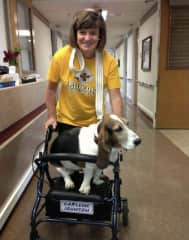 My bassett and I worked at nursing homes for 10 years