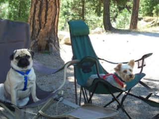 My dogs love to go camping with us.