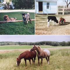 From our hobby farm years (1995-2014)