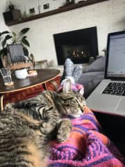 Cozy cat-sitting in Portland Oregon this winter.
