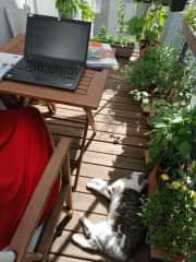 Cat-co-working in Berlin 2021