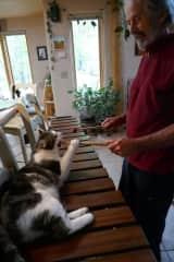 Chip likes to play marimba