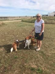 House sitting 4 delightful King Charles Cavaliers and getting caught up with their dog leads!