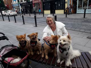 Pet awareness killarney summer 2019