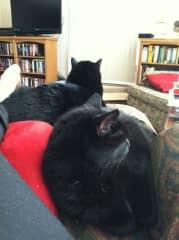 Artie & Winnie chair-sharing