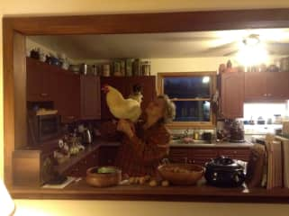 Vania, a young rooster decided to visit when the window was opened.