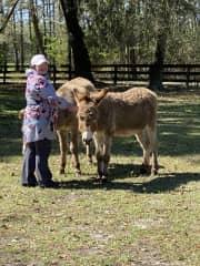 Visiting a friend's farm