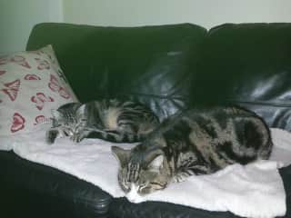 Tiko and Izy hogging the couch!