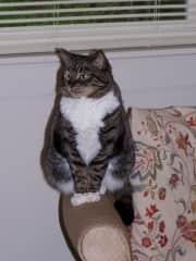 Regal kitty.