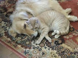 Hobbes and Quincy taking a nap. Jackson isn't as close to Hobbes, but they coexist just fine.