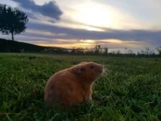 Our little pipsqueak enjoying the sunset.