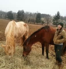 I do seasonal work for a local Equine Rescue