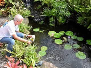 We are experienced in Koi pond care. Hawaii