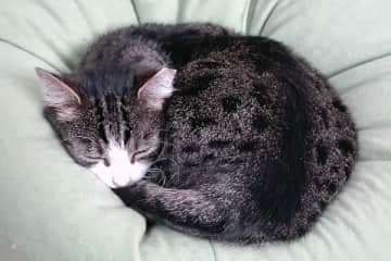Lilly - loves sleeping in a bean bag chair.