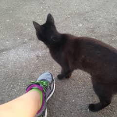 I know most of my neighborhood cats & will stop to pet them during my run, guess I'm a bit of a cat lady.