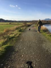 The Cowichan River estuary is one of our favourite walks with the pups.