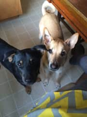 Buddy (black) and Skye (blonde)