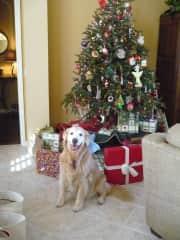 Gracie waits for Santa