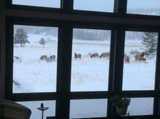 View from our sun room in winter