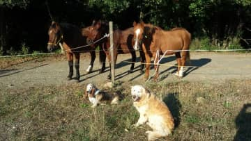 Our three horses and two of our three dogs