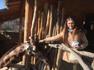 Petting a giraffe boy who felt in love with me :-D <3