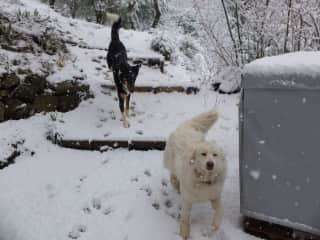 Corto and Kees enjoy their first snow experience