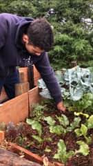 harvesting their own food!