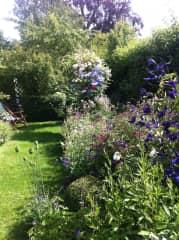 Summer in the garden