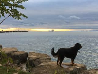 Henry watching the ships head out on Lake Ontario