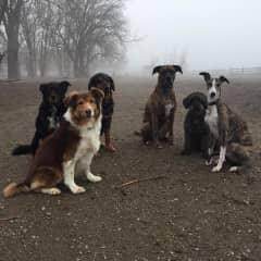 Foggy dogs