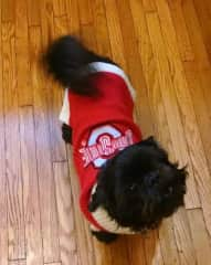 Lovie is an OSU fan!