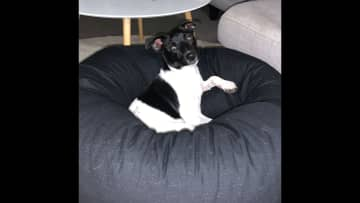 And chilling on the beanbag!