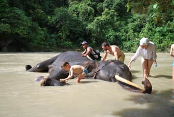 washing an elephant in a rescue centre in Indonesia