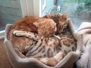 Freyja & Odin, winter napping