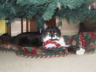 My own Lucy under the Christmas tree