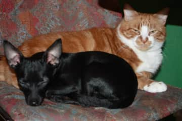 My first cat and my first dog sleeping together ( my cat died 3 years ago)