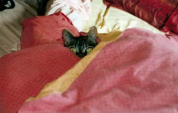 thats my little cat Soba that lived with me in Paris