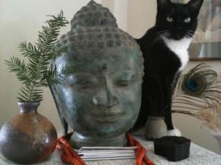 Muppet and Buddha in my living room.