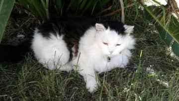 My cat Harry