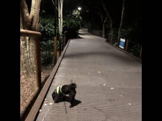 An evening local walk